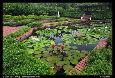 Pond with water lillies, Singapore Botanical Gardens. Singapore